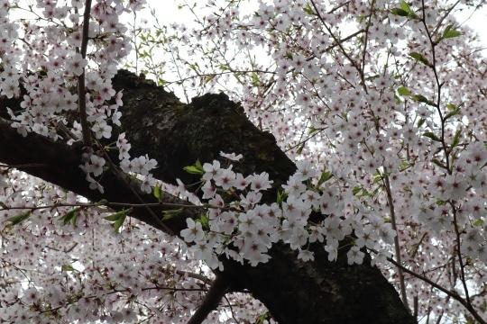 hikone11.jpg