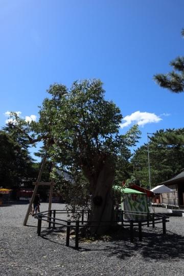 mizushima135_Fotor.jpg